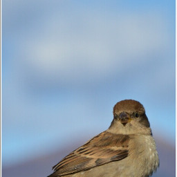 birds hdr freetoedit photography petsandanimals