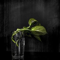 wppgreen colorsplash photography nature blackandwhite