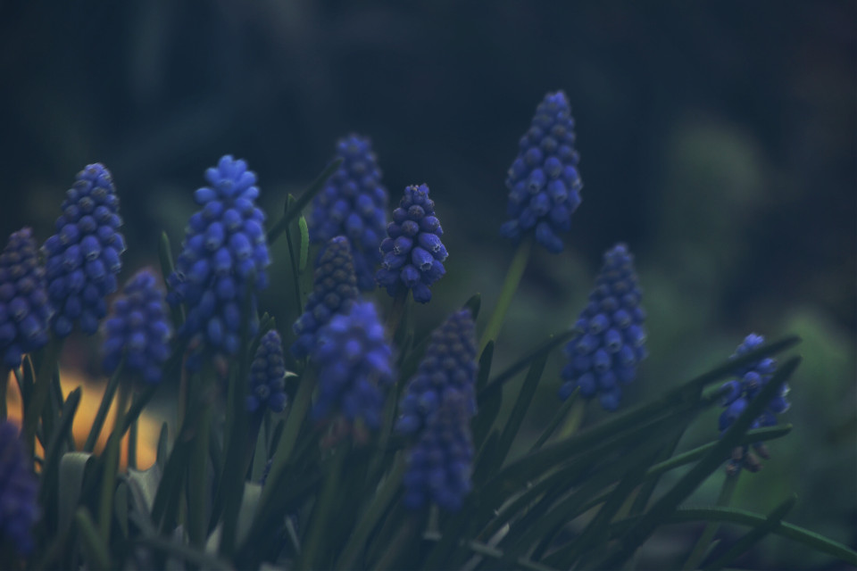 Beautiful bluebells #nature #flowers #spring #outandabout #lightmask #dodger #photography