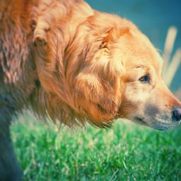 dog pet animal happy sunny