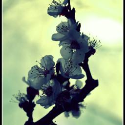 crossprocess freetoedit photography flower nature