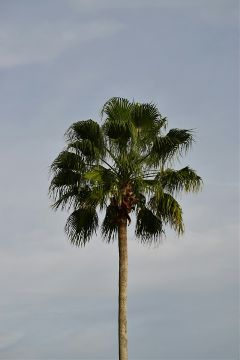 freetoedit palmtrees
