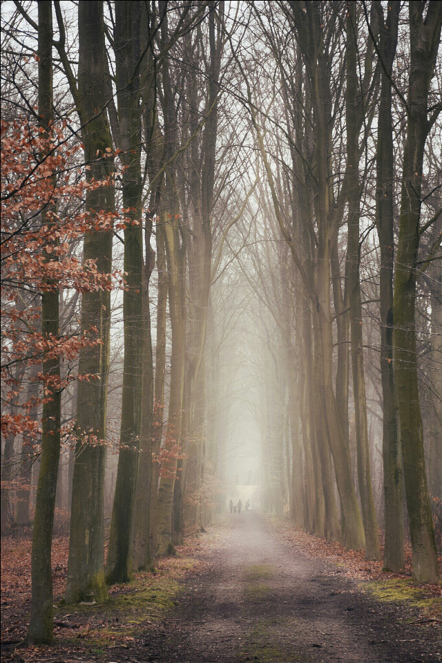 #road  #trees #mist #nature #emotions