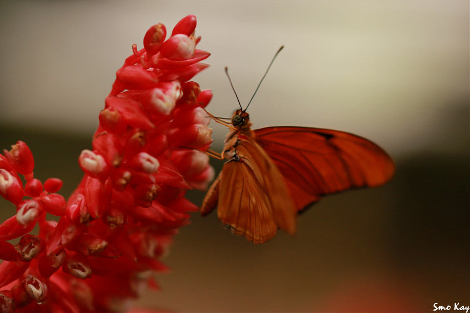 #butterfly #photography #nature #petsandanimals #animals #zoo #colorful #red #wildlife