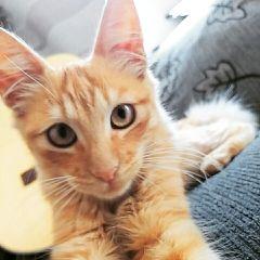 cute selfie cats photography guitar