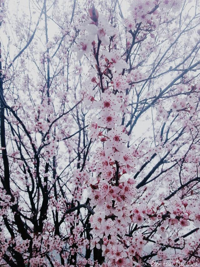 #photography #spring #blossom #nature