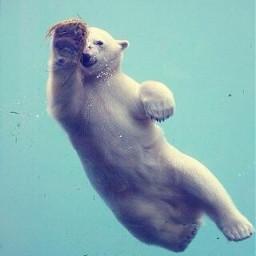 freetoedit swiming
