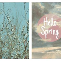spring printemps sun flower nature freetoedit