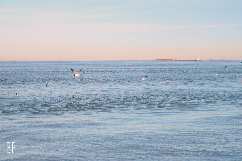 #interesting #art #beach #california #photography #sky #sea #run #dailyinspiration #healthyhabits #healthyhabits #life #people #FreeToEdit