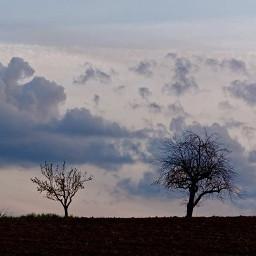 trees clouds landscape