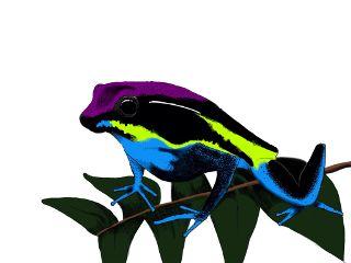 wdpzooanimals art rainforest frog