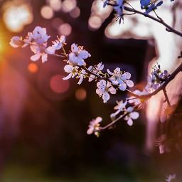 blossom sun spring lightroom flower