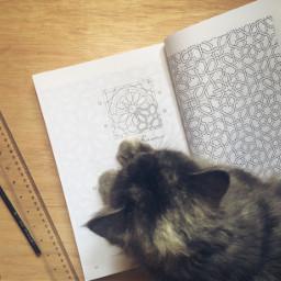 islamicart islamicdicoration art photography cat