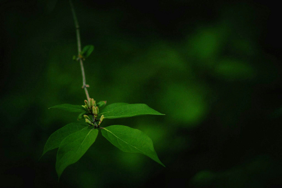Solid Green #FreeToEdit #nature #plant #green #pretty  #springtime  #spring #leaf #photography  #artistic