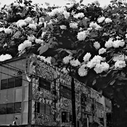 building flowers blackandwhite doubleexposure interesting