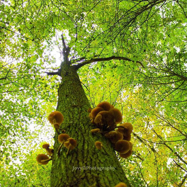 #FreeToEdit #jovyphotography #greentree #NaturePerfect #proudMyShoot #BelgiumShoot #nature #picsoftheday