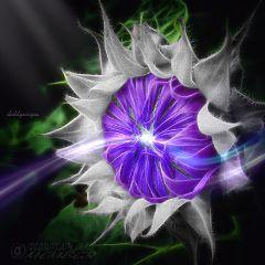 sunflower edited lights colorsplash inspiring