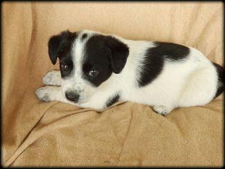 puppy puppyshoot petsandanimals cute howdoisaygoodbye