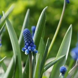 flower bokeh nature blue