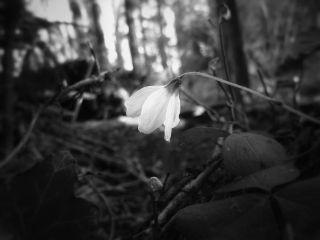 blackandwhite flower nature spring natural